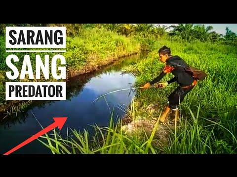 Spot Mancing Gabus Di Jambi