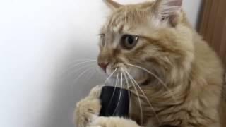 Смешные коты - Кот и пылесос