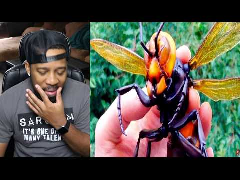 10 MOST DANGEROUS INSECTS YOU MUST RUN AWAY FROM - REACTION!!!