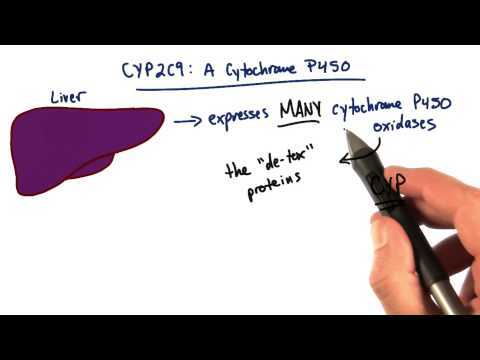 Cytochrome P450 - Tales from the Genome