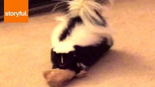 Skunks Make Adorable Pets