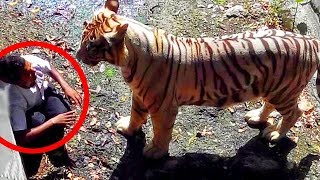 Most Shocking and Dangerous Wild & Zoo Animal Attacks Caught on Tape