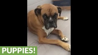 Boxer sings along to classic 'Hallelujah' song