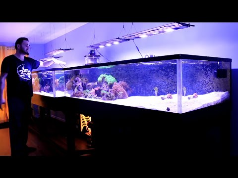 REEF TANK ADDICTION Season 2 Episode 2 ( 410 Gallon 16 feet long All in One Reef )
