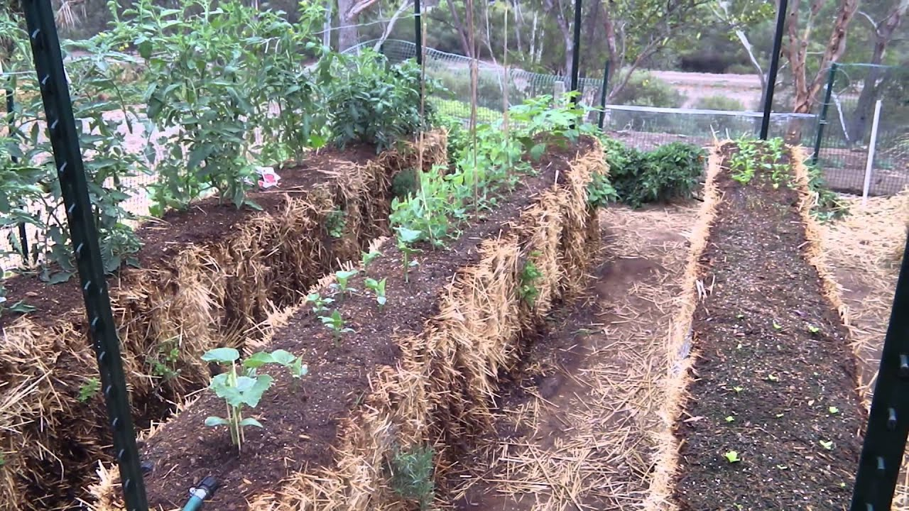 My Straw Bale Garden Youtube