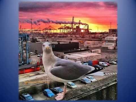 Rotterdam in beeld