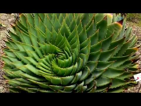 The Fibonacci Planet - Nature And Reality. (Unrestricted)