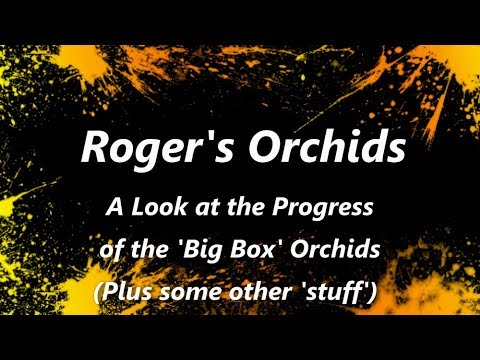 A Look at the Progress of the 'Big Box' Orchids