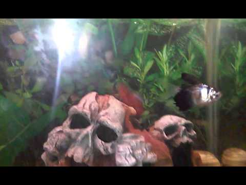 My 20 gallon fish tank decoration ideas for your aquarium for Decoration aquarium 60 litres