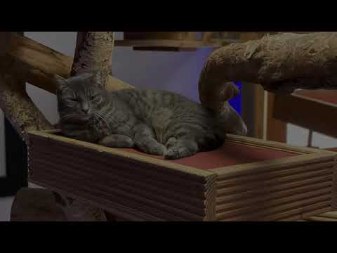 TinkaTV first Upload Teaser - Funny Cat Video Teaser