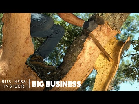 How 40 Million Cork Wine Stoppers Are Harvested A Day | Big Business