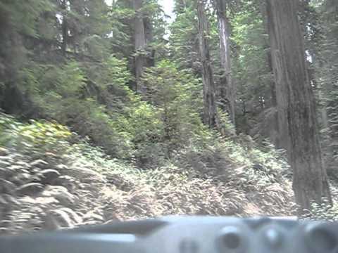 Jedediah Smith SP Redwoods