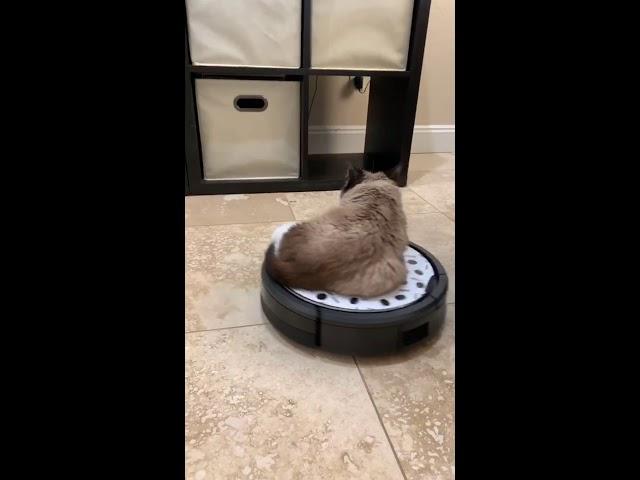 Free teen webcam cat good