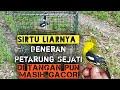 Mikat Burung Sirtu Sirpu Sirtu Liarnya Gacor Di Tangan  Mp3 - Mp4 Download