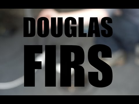 CT Sessions - Douglas Firs