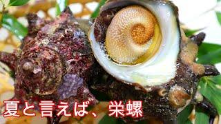 【栄螺】 サザエ刺身 掃除~肝の色の違い