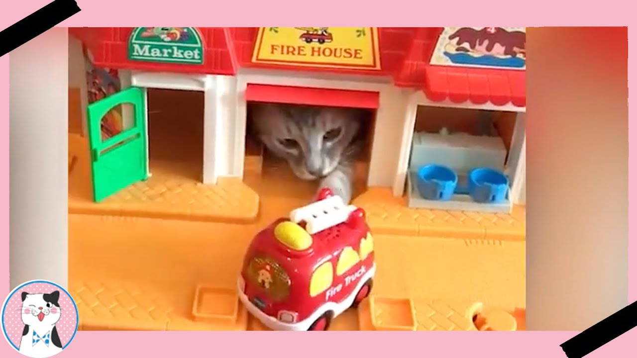 Funny Cats React To Toy And Video Game Funny Baby And
