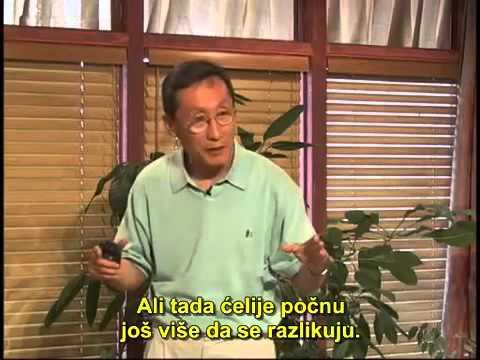 9. Kako radi imuni sistem (Konverzija raka 2) - Dr Šang Li