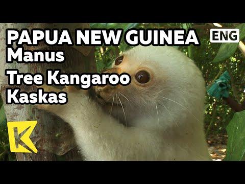 【K】Papua New Guinea Travel-Manus[파푸아뉴기니 여행-마누스]나무 캥거루, 카스카스/Tree Kangaroo Kaskas/Island/Animal