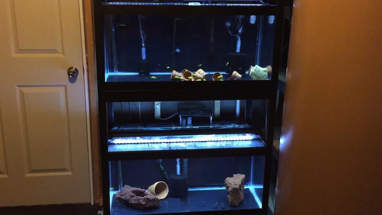 Tank updates double 40 gallon breeder aquarium rack youtube for Double fish tank