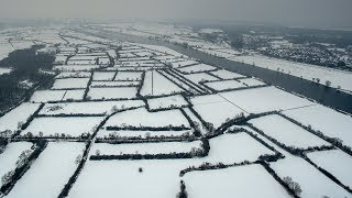 Maasheggen in de sneeuw