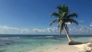 Download ЗВУКИ МОРЯ; 3 часа Видео Тропический пляж с голубым небом, белым песком и пальмой. Mp3 and Videos