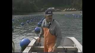 Oyster Farming in Halibut Cove Alaska
