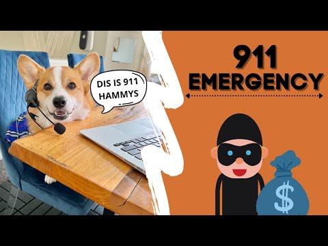 Dog Answers 911 Call! #shorts #corgi