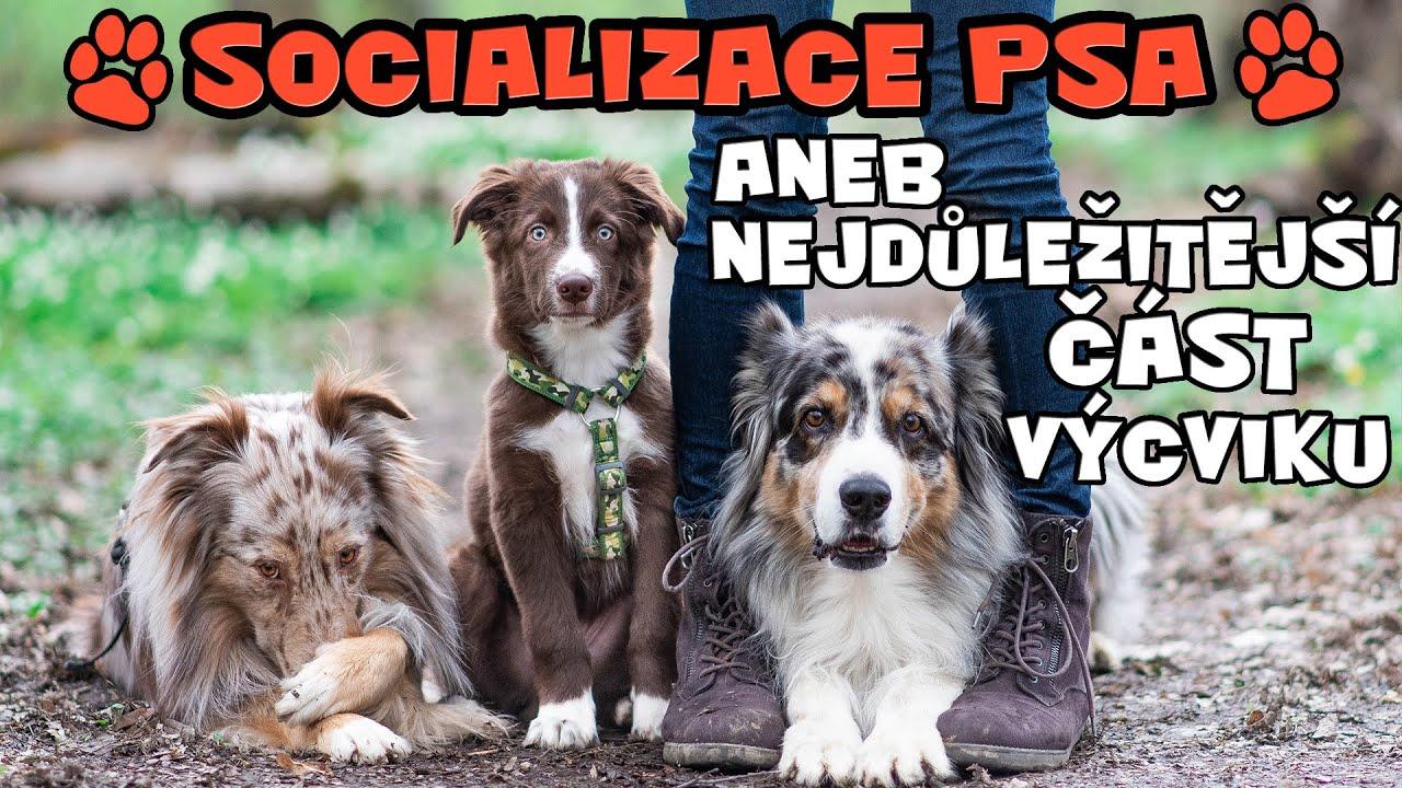 SOCIALIZACE PSA aneb začleňování štěněte do lidského i psího světa