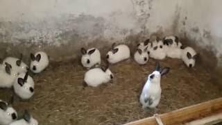 Кроличья мини ферма Сергея