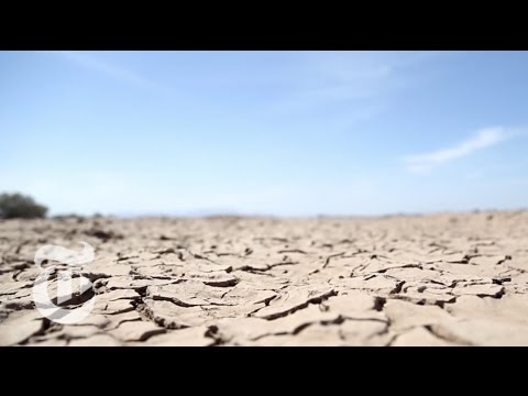 Bringing Back the Colorado River Delta - 2013 | The New York Times
