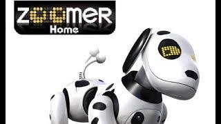 Zoomer  -  Meu Cachorro Robô