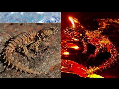 Photoshop Tutorial Magma effect: The Armagmadillo Lizard thumbnail