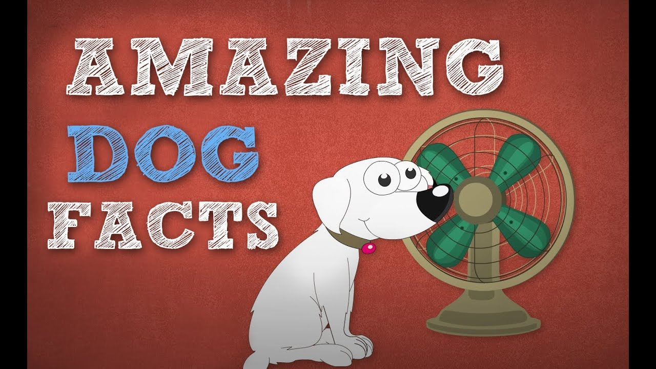 Amazing Dog Facts Omg Facts About Animals Youtube