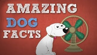 Amazing Dog Facts  | Omg Facts About Animals