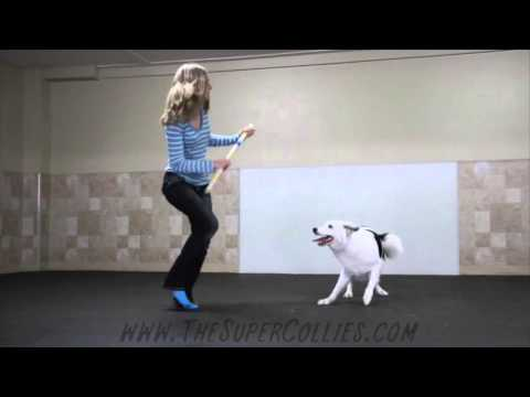 Boogie Shoes Canine Freestyle Routine!