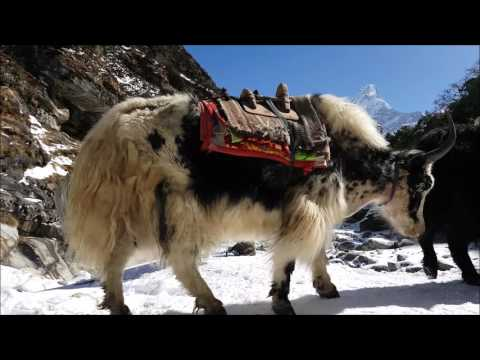 Everest Base Camp Trek 4 March to 22 March 2017