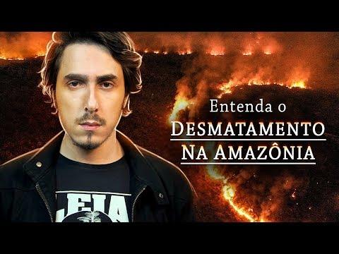 Entenda o Desmatamento na AMAZÔNIA de um jeito SIMPLES