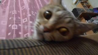 Кошка Ромашка-глазастик)))