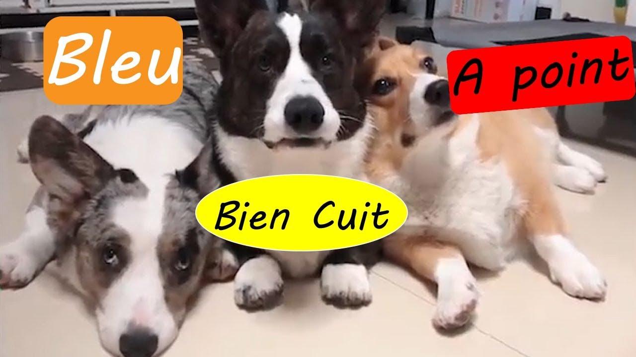 Les Trois Petits Chiens Trop Mignon Drôle Animaux Chien Et Chat 5