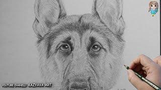 Как нарисовать морду собаки Немецкой овчарки с помощью циркуля. Урок рисования