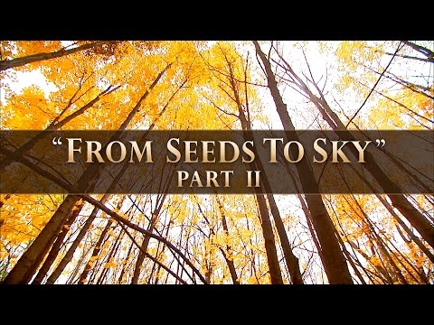"Wisconsin Young Forest Partnership ""From Seeds to Sky"" (Part 2)"