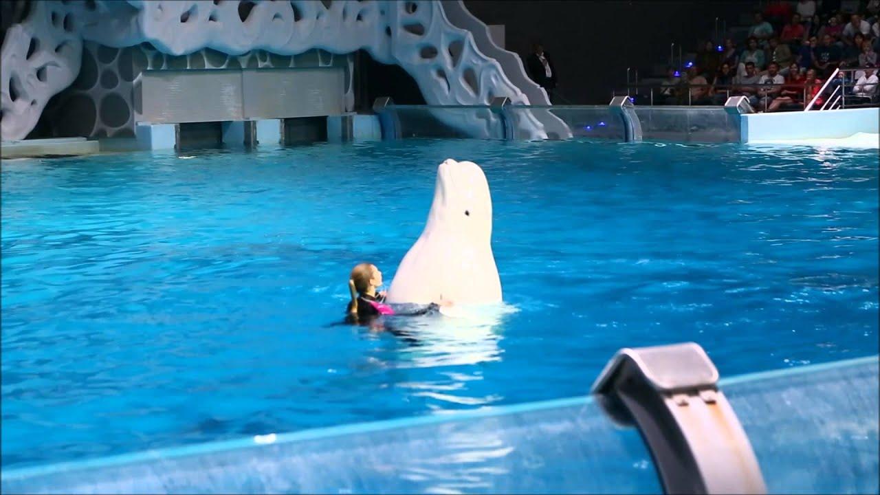 Белый кит Пончик - звезда шоу!