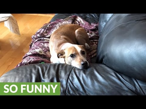 Hidden camera captures naughty dog's antics