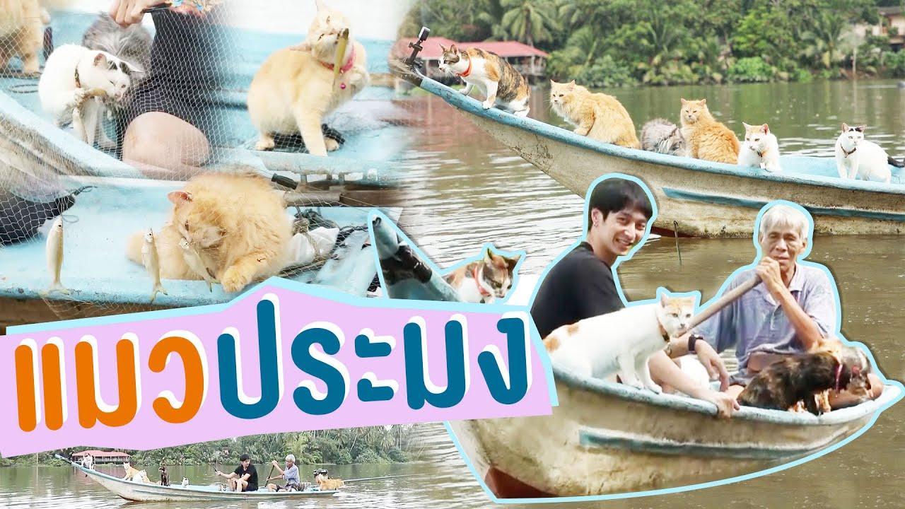 แมวประมง | ไทยทึ่ง WOW! THAILAND