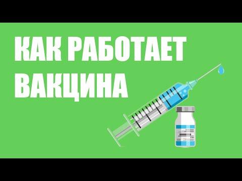 Как работает вакцина?