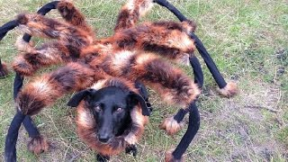 Mutant Giant Spider Dog (SA Wardega)(, 2014-09-04T14:28:22.000Z)