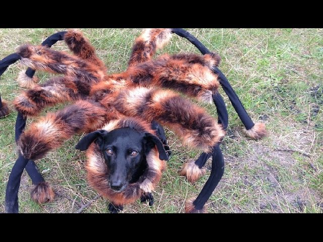 Mutant Giant Spider Dog (SA Wardega)