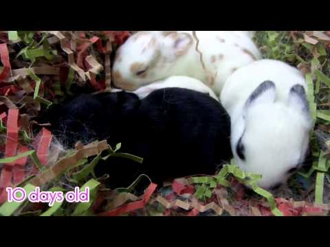 baby-rabbit-growing-from-2-days-until-13-days-old