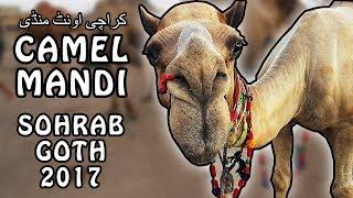 CAMEL MANDI SOHRAB GOTH | KARACHI 2017 | Video In URDU/HINDI